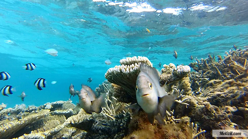 Excursion Snorkeling Ile Maurice
