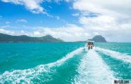 Nage avec les dauphins et Ile aux Bénitiers avec Namori Tours